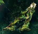 Valerinne - Arborescent (2013)